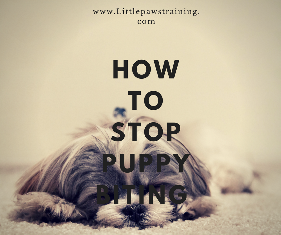 How to Stop Puppies from Biting in 2018