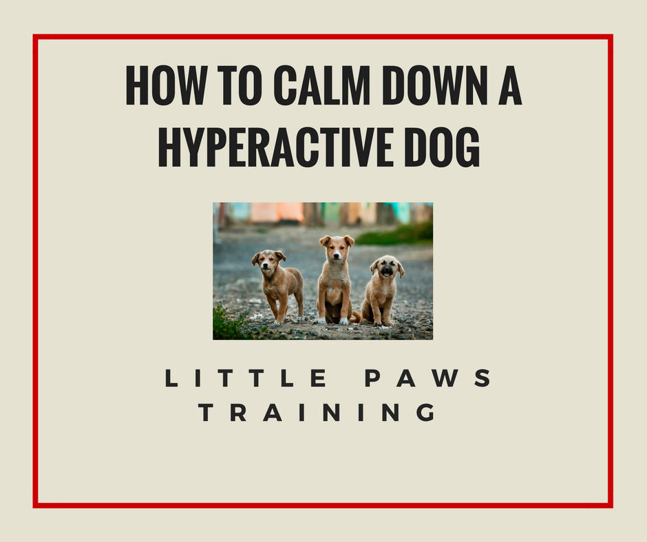 How to calm down a Hyperactive dog in 2018