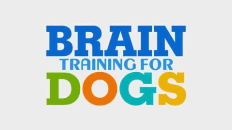 Brain Training For Dogs Review: Is it Just Another Scam?
