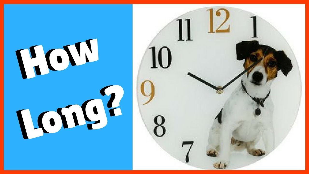 How Long Does It Take to Train a Dog?
