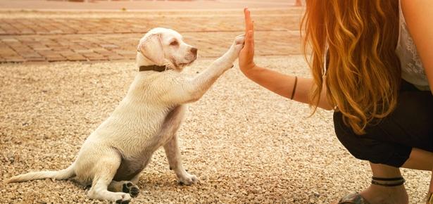 obedience dog training