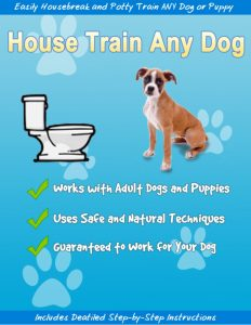 house train any dog 2018