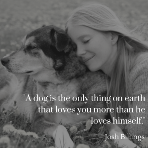 josh billings review on secrets to dog training