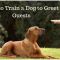 How to Train your Dog to Greet Guests Properly