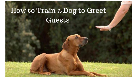 How to Train a Dog to Greet Guests in 2019