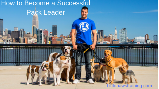How to be Become a Pack Leader to your Dog