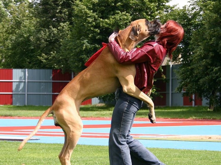 How to Stop your Dog from Jumping on Guests or Strangers