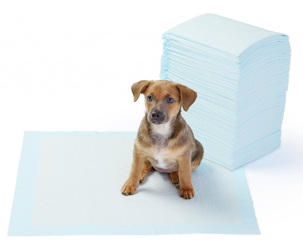 bulldog puppy potty training pads
