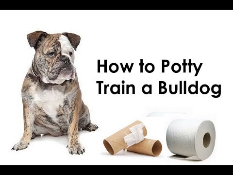 how to potty train bulldog puppy