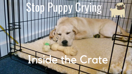 how to stop puppy crying in the crate