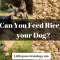 Can you Feed Rice to your Dog?