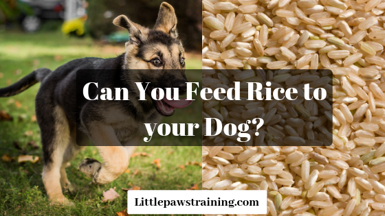 Can you feed rice to dogs?