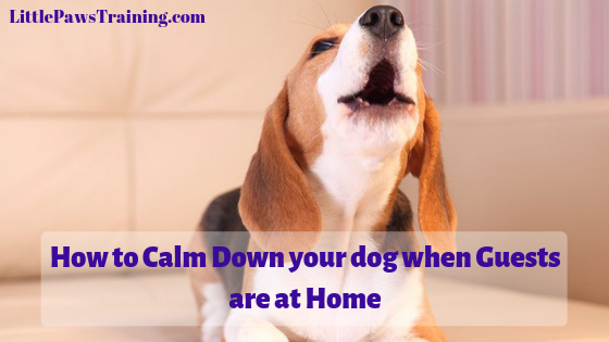 How to Calm down you dog when Guests are at home