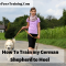 How to Train a German Shepherd Dog To Heel