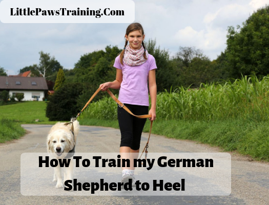 How to train my german shepherd to heel fast
