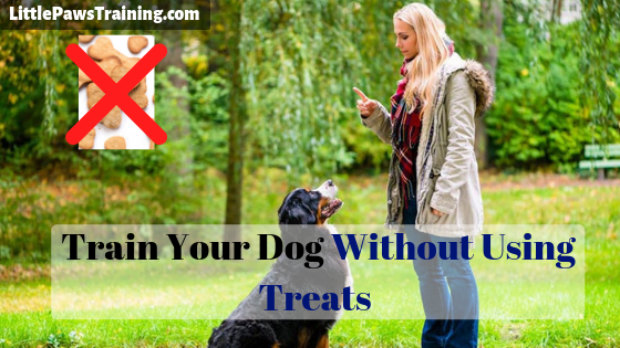 Train Your Dog Without Using Treats
