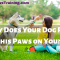 Why Does Your Dog Put his Paws on you?
