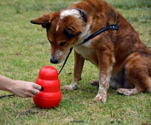 kong toy to make your dog calm