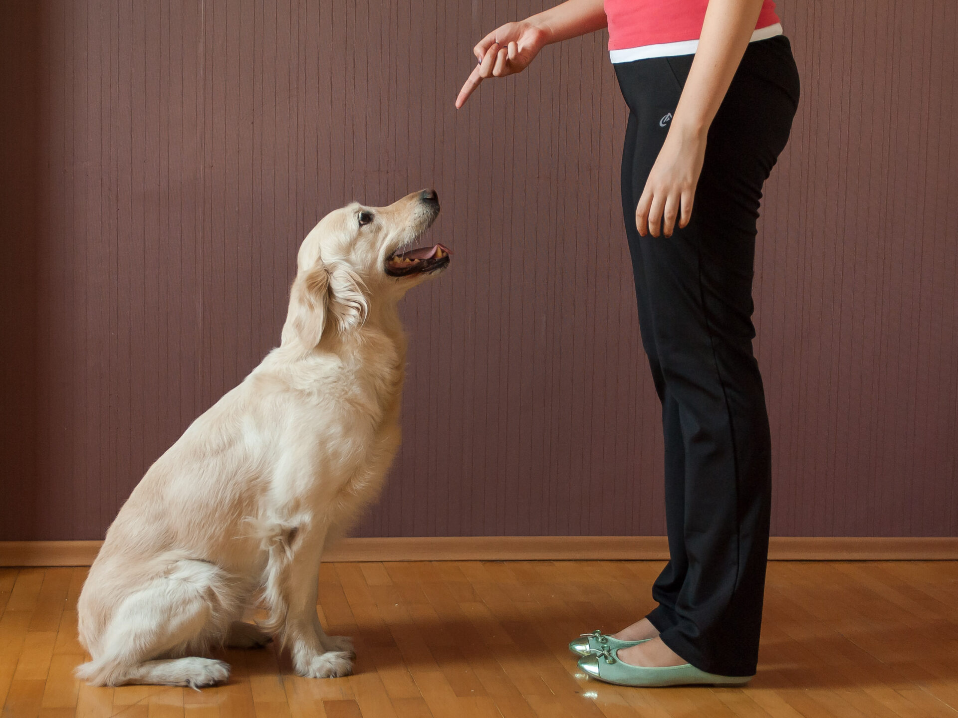 sit command without using treats