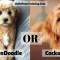 Goldendoodle vs Cockapoo [Which Would Be Best For You]