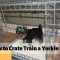How to Quickly Crate Train a Yorkie Puppy