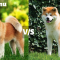 Shiba Inu vs Akita: Complete Comparison between the Two Breeds