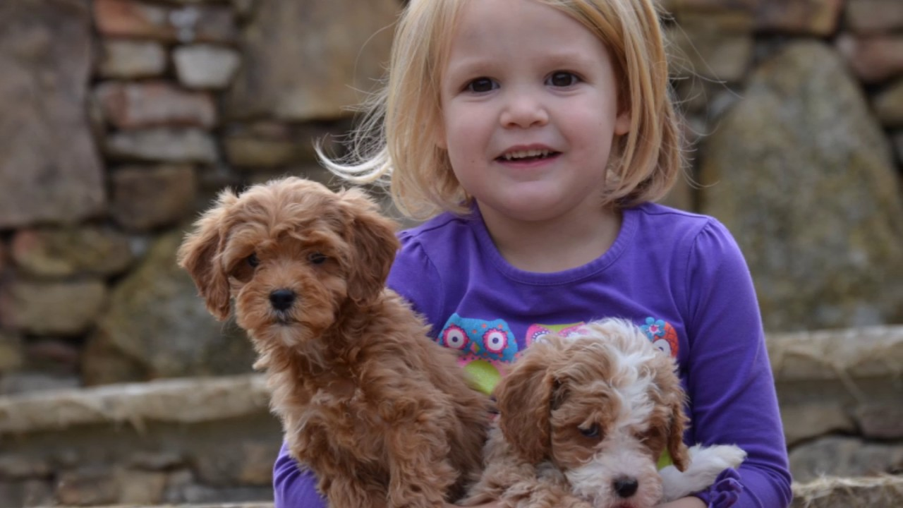 goldendoodle with kids
