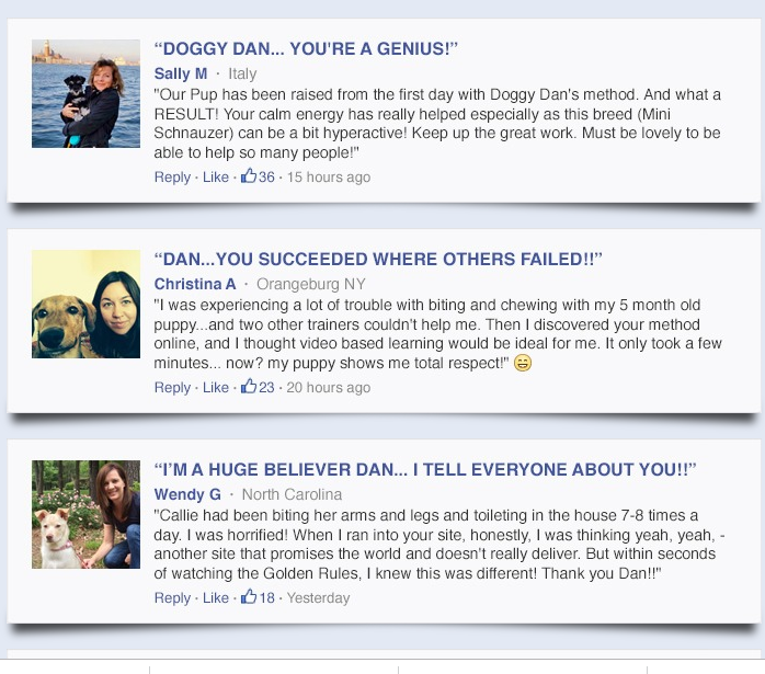 testimonial of the online dog trainer