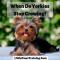 When Do Yorkies Stop Growing?