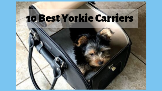 10 Best Dog Carriers for your Yorkie