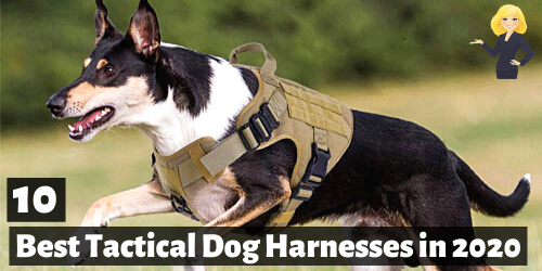 Best Tactical Dog Vests and Harnesses 2020