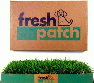 best indoor potty 2019 freshpatch