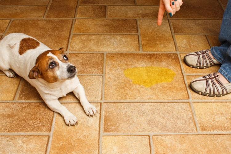 doggielawn vs freshpatch 2019