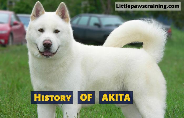 History of Akita