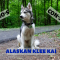 What are the Pro's and Con's of Adopting an Alaskan Klee Kai