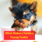 What makes a Yorkie a Teacup Yorkie