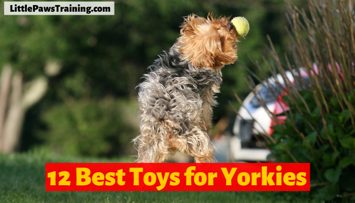 12 Best Toys for Yorkies