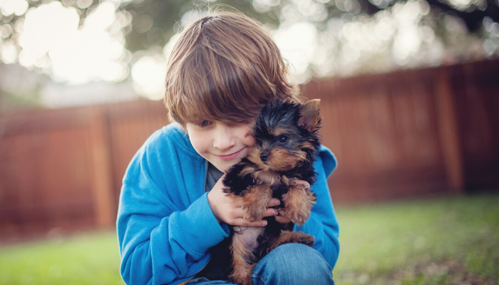 Are Yorkshire Terriers Good With Kids?