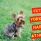 How to cut Yorkies nails at home?