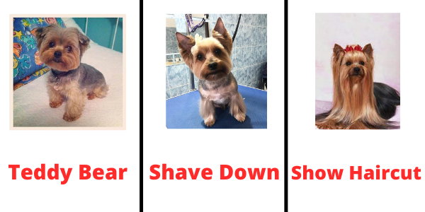 Types of Yorkie Hairstyles
