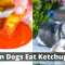 Can Dogs eat Ketchup? Is it Safe for your dog?