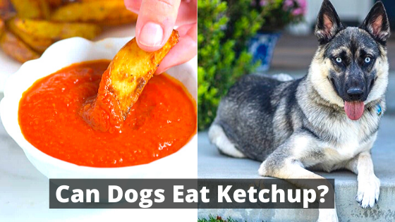 Can Dogs Eat Ketchup?