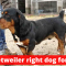 A Detailed Guide on Basset Hound Rottweiler Mix