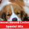 A Detailed Guide on Basset Hound Cocker Spaniel mix