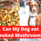 Can dogs eat cooked mushrooms? Is it Safe?