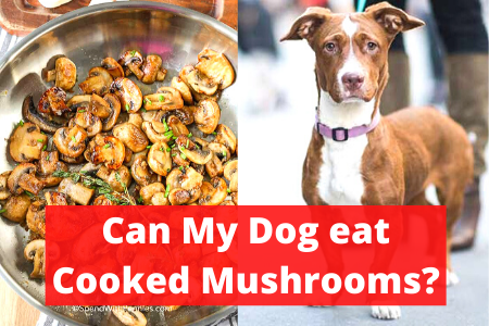 Can My Dog eat cooked mushrooms