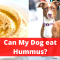 Can dogs eat Hummus? Should you Feed it?