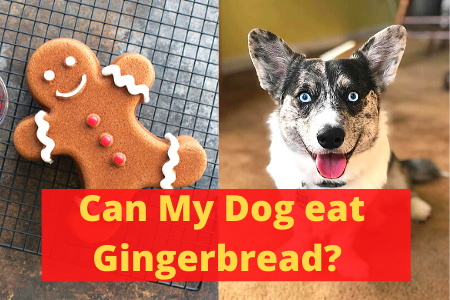 Can Dogs Eat Gingerbread? Should you Feed that?