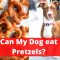Can Dogs eat Pretzels? Read this Before you Feed it