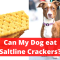 Can dogs have Saltine Crackers? Should you Feed It?